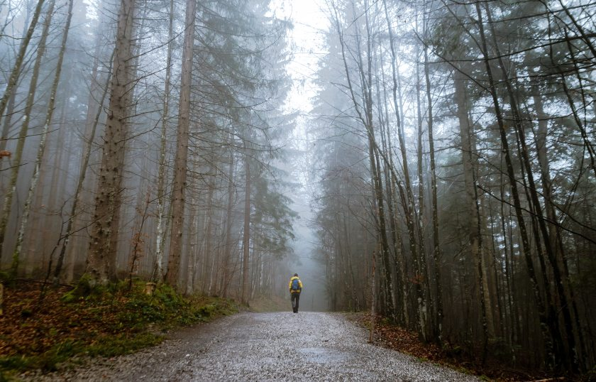 alone-autumn-mood-forest-cold-397096