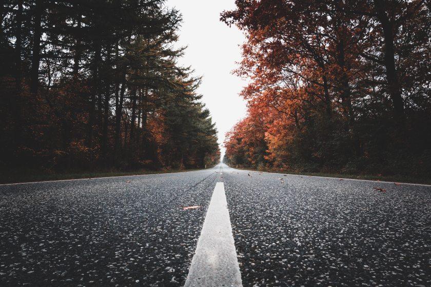 4k-wallpaper-asphalt-conifers-2397262